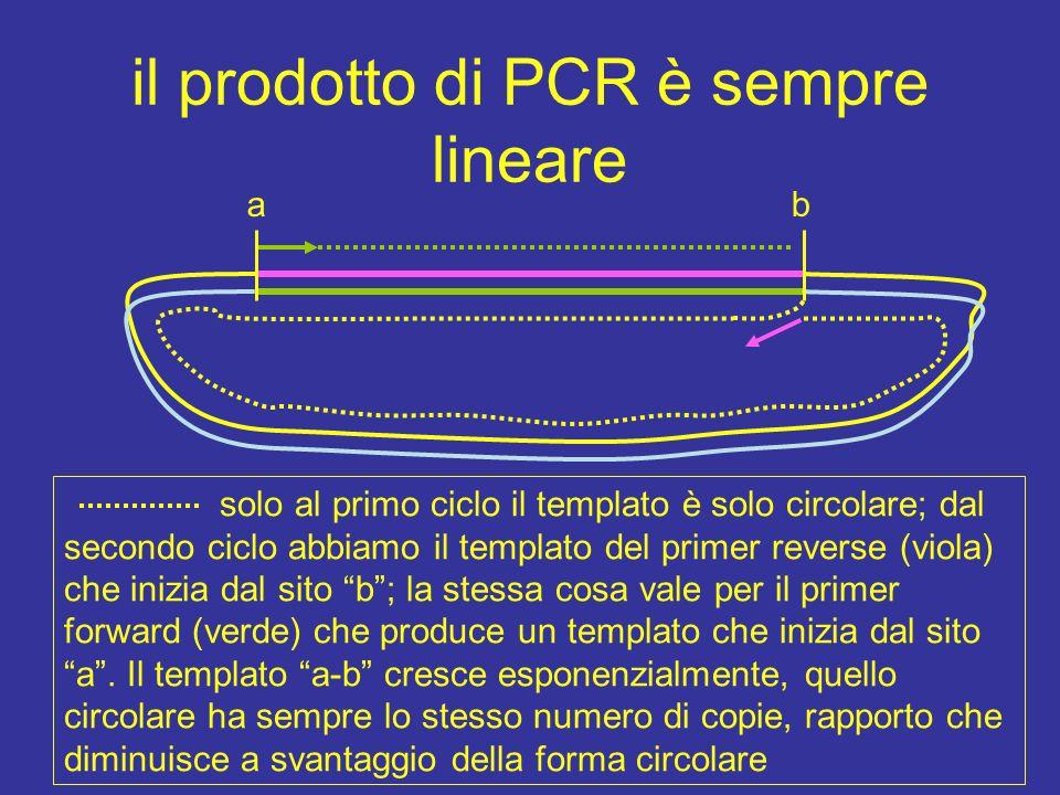 si amplifica solo lamplicone dal II ciclo compare il frammento con le estremità corrispondenti al 5 dei due primers: primer frw la taq polimerasi non ha ostacoli e non si ferma primer rev primer frw templato I amplificaz nuovo templato con inizio dal 5 dei primers la polimerase non può proseguire perchè il templato si interrompe al 5 dei primers da cui parte la sintesi