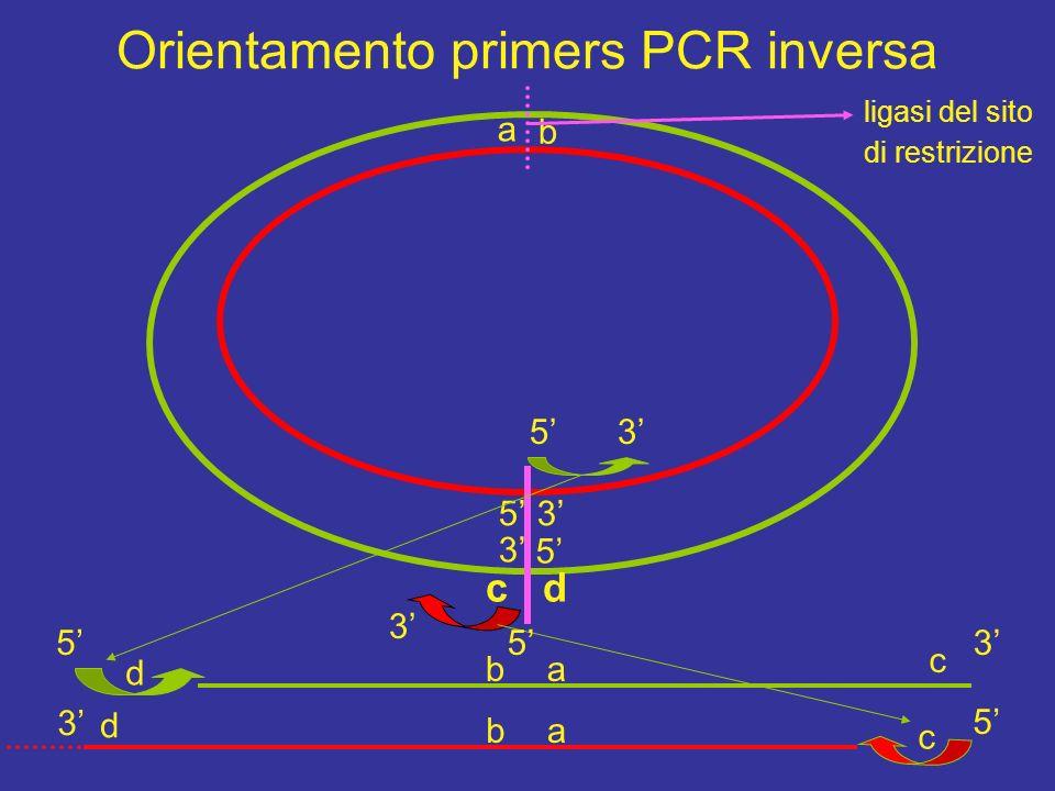 I polimorfismi si analizzano con PCR .