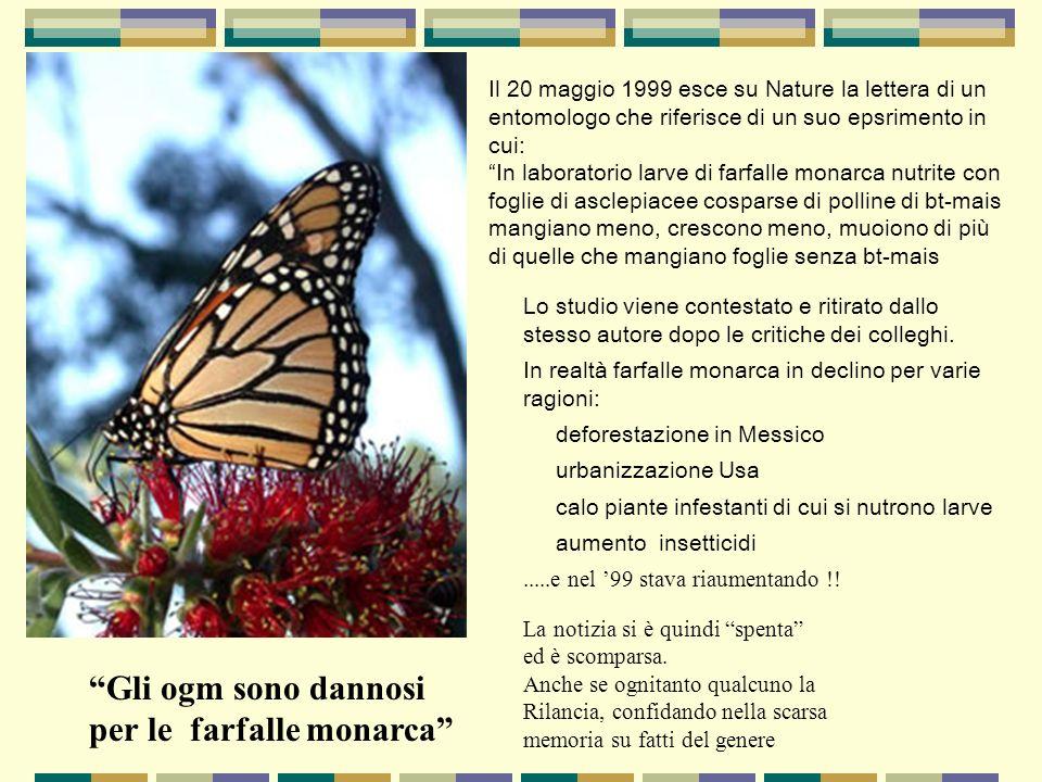 Il 20 maggio 1999 esce su Nature la lettera di un entomologo che riferisce di un suo epsrimento in cui: In laboratorio larve di farfalle monarca nutri