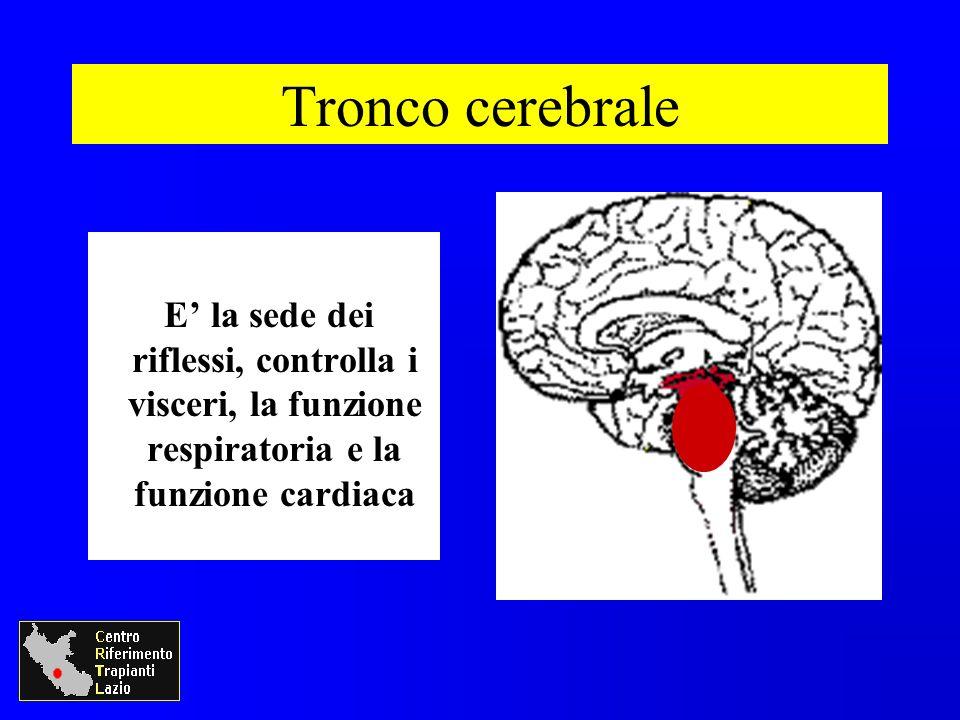 E la sede dei riflessi, controlla i visceri, la funzione respiratoria e la funzione cardiaca Tronco cerebrale