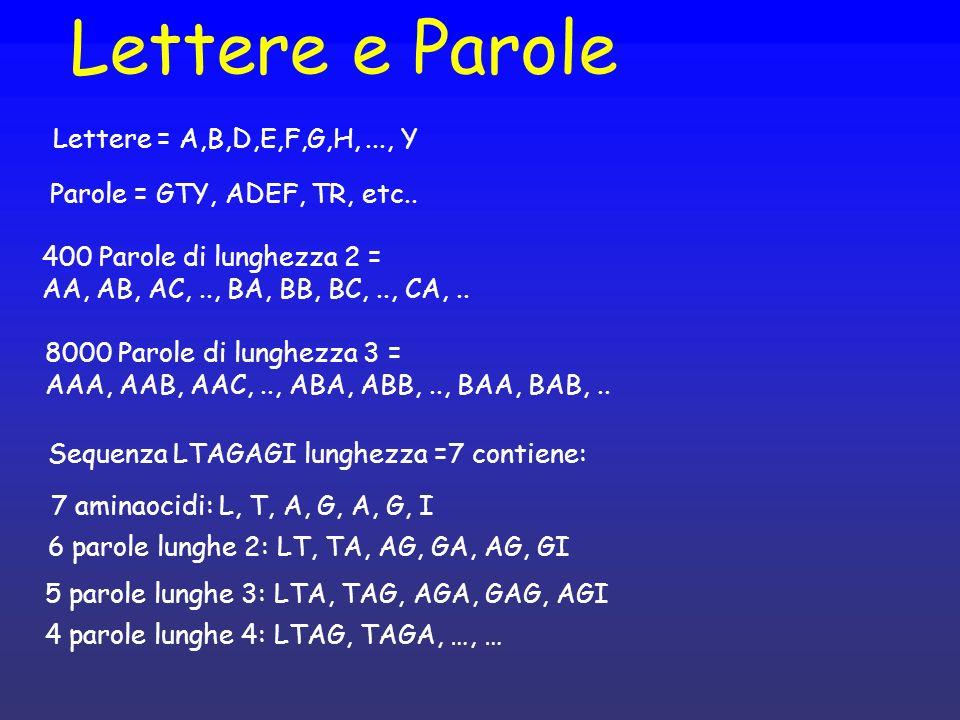 Lettere e Parole Lettere = A,B,D,E,F,G,H,..., Y 7 aminaocidi: L, T, A, G, A, G, I Sequenza LTAGAGI lunghezza =7 contiene: 8000 Parole di lunghezza 3 = AAA, AAB, AAC,.., ABA, ABB,.., BAA, BAB,..