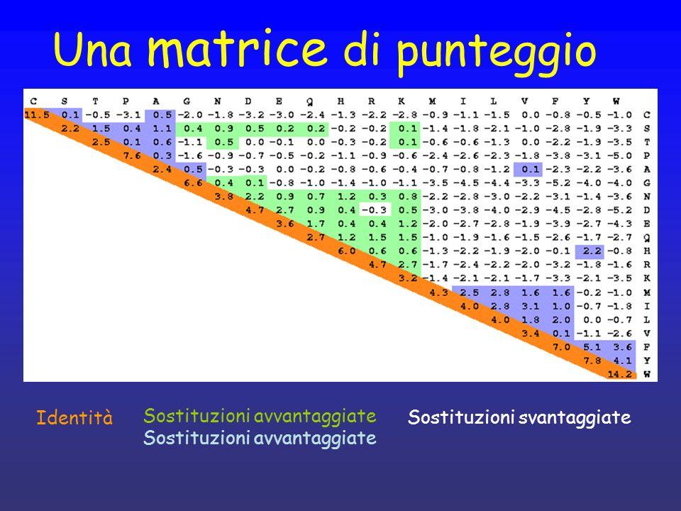 Una matrice di punteggio Identità Sostituzioni avvantaggiate Sostituzioni svantaggiate