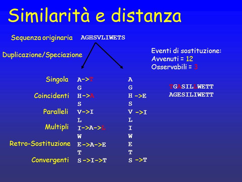 Similarità e distanza Singola Paralleli Multipli Convergenti AGHSVLIWETSAGHSVLIWETS AGHSVLIWETS Eventi di sostituzione: Avvenuti = 12 Osservabili = 3