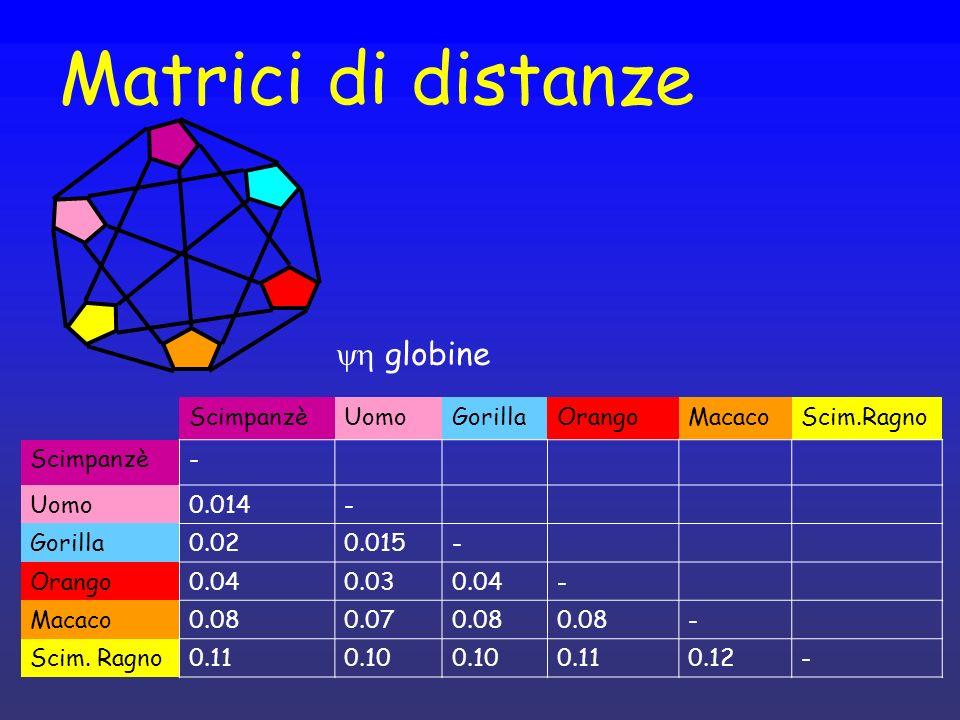 Matrici di distanze ScimpanzèUomoGorillaOrangoMacacoScim.Ragno Scimpanzè- Uomo0.014- Gorilla0.020.015- Orango0.040.030.04- Macaco0.080.070.08 - Scim.