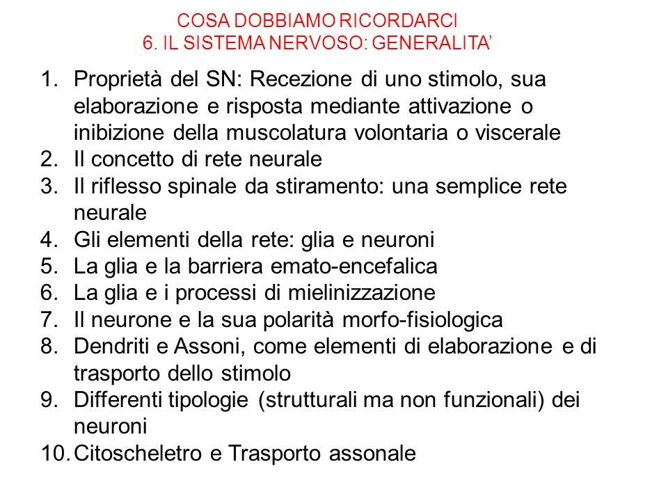 COSA DOBBIAMO RICORDARCI 6. IL SISTEMA NERVOSO: GENERALITA 1.Proprietà del SN: Recezione di uno stimolo, sua elaborazione e risposta mediante attivazi