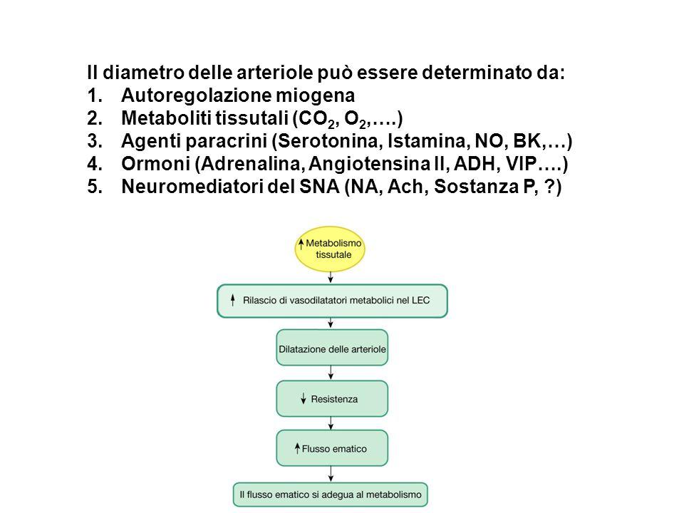 Il diametro delle arteriole può essere determinato da: 1.Autoregolazione miogena 2.Metaboliti tissutali (CO 2, O 2,….) 3.Agenti paracrini (Serotonina,