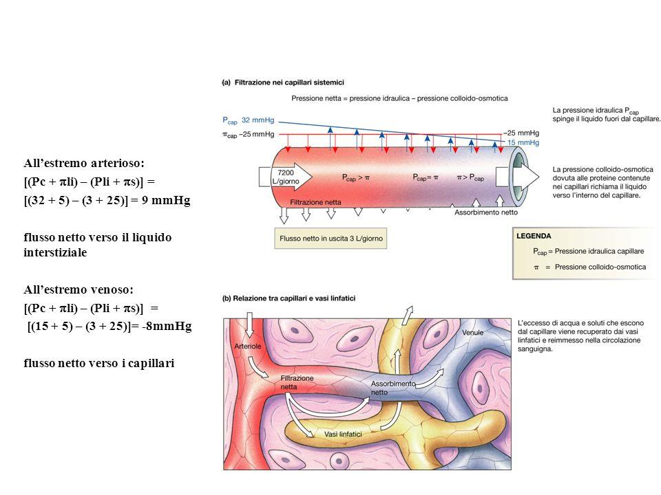 Allestremo arterioso: [(Pc + li) – (Pli + s)] = [(32 + 5) – (3 + 25)] = 9 mmHg flusso netto verso il liquido interstiziale Allestremo venoso: [(Pc + l