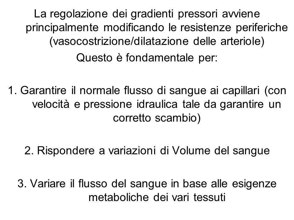 La regolazione dei gradienti pressori avviene principalmente modificando le resistenze periferiche (vasocostrizione/dilatazione delle arteriole) Quest