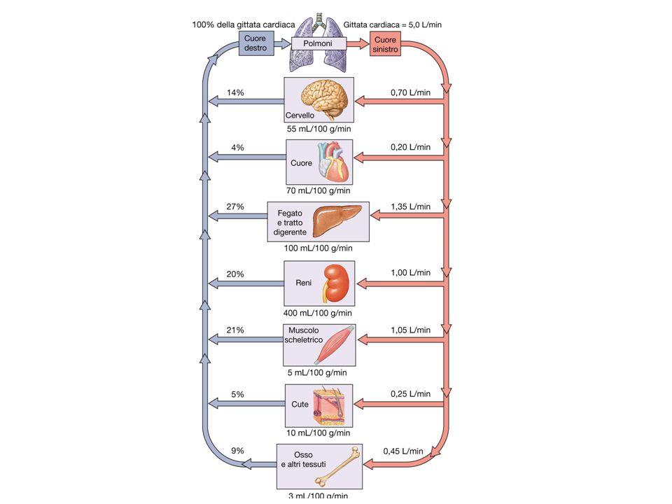 Allestremo arterioso: [(Pc + li) – (Pli + s)] = [(32 + 5) – (3 + 25)] = 9 mmHg flusso netto verso il liquido interstiziale Allestremo venoso: [(Pc + li) – (Pli + s)] = [(15 + 5) – (3 + 25)]= -8mmHg flusso netto verso i capillari