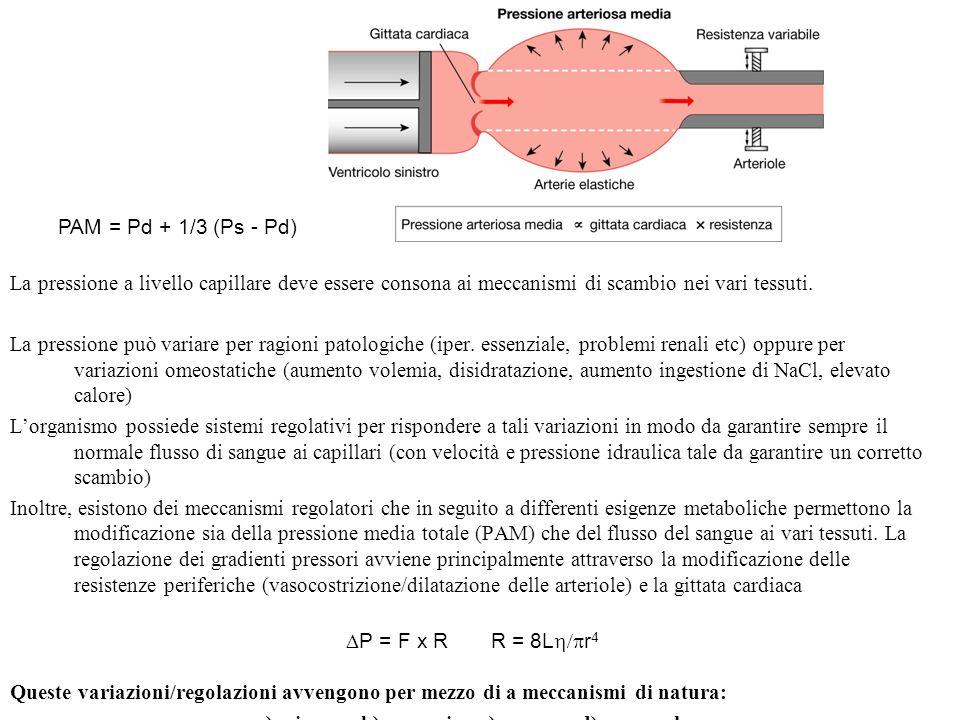 La pressione a livello capillare deve essere consona ai meccanismi di scambio nei vari tessuti. La pressione può variare per ragioni patologiche (iper