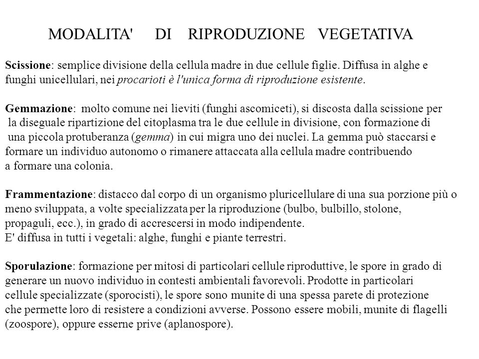 MODALITA' DI RIPRODUZIONE VEGETATIVA Scissione: semplice divisione della cellula madre in due cellule figlie. Diffusa in alghe e funghi unicellulari,