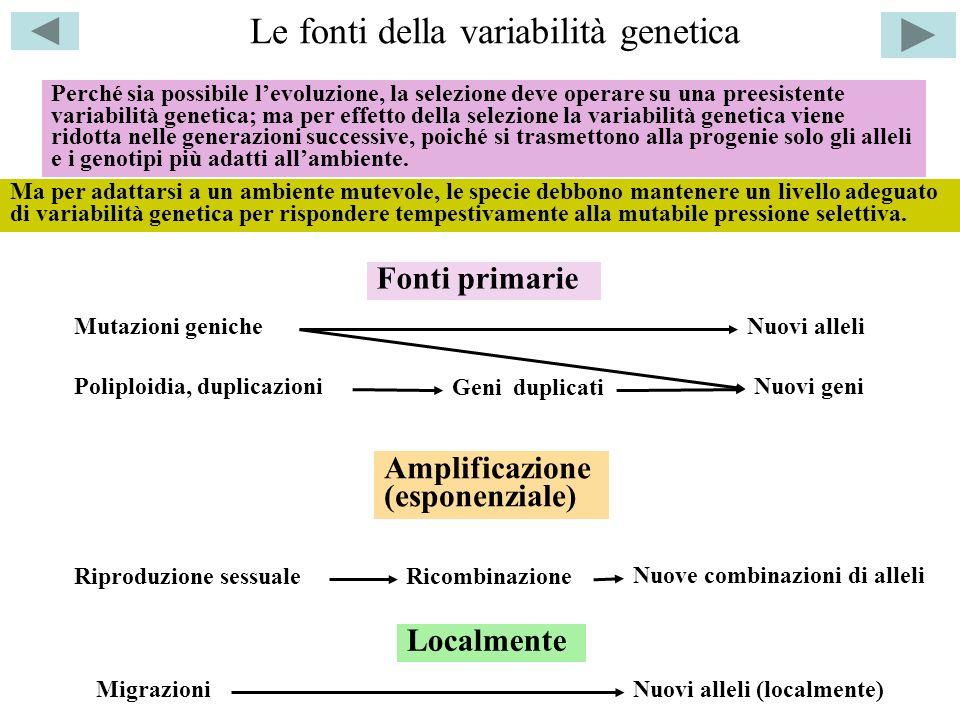 Le fonti della variabilità genetica Mutazioni geniche Poliploidia, duplicazioni Nuovi alleli Nuovi geni Geni duplicati Riproduzione sessualeRicombinaz