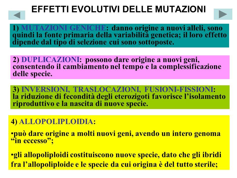 EFFETTI EVOLUTIVI DELLE MUTAZIONI 1) MUTAZIONI GENICHE: danno origine a nuovi alleli, sono quindi la fonte primaria della variabilità genetica; il lor