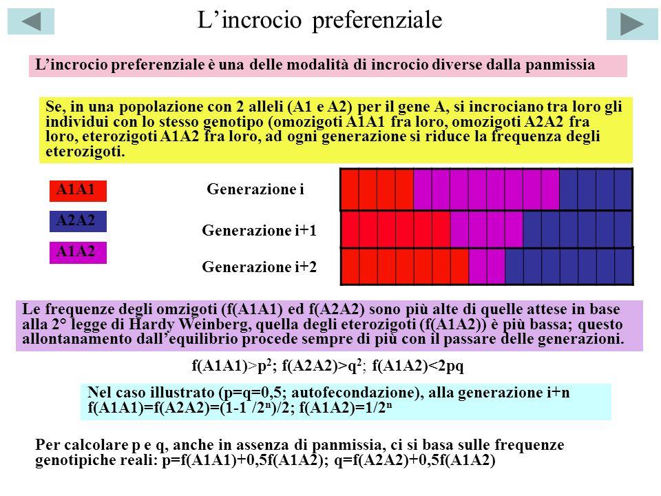 Lincrocio preferenziale Lincrocio preferenziale è una delle modalità di incrocio diverse dalla panmissia Se, in una popolazione con 2 alleli (A1 e A2)