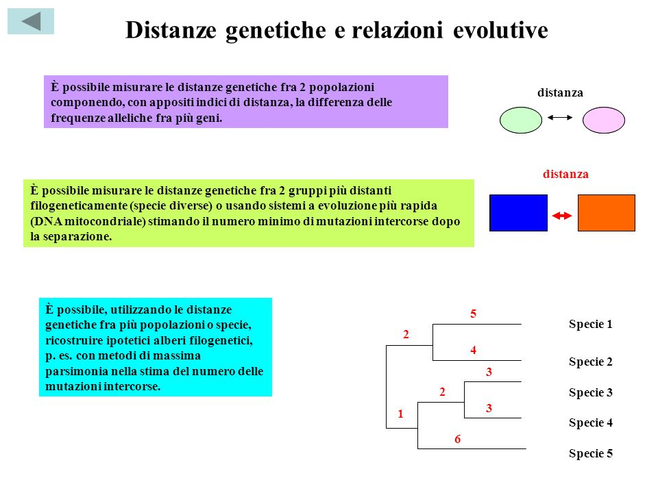 Distanze genetiche e relazioni evolutive È possibile misurare le distanze genetiche fra 2 popolazioni componendo, con appositi indici di distanza, la
