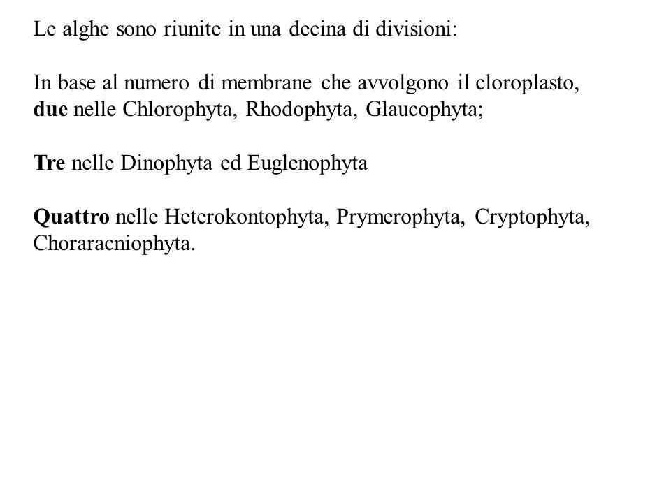 Le alghe sono riunite in una decina di divisioni: In base al numero di membrane che avvolgono il cloroplasto, due nelle Chlorophyta, Rhodophyta, Glauc