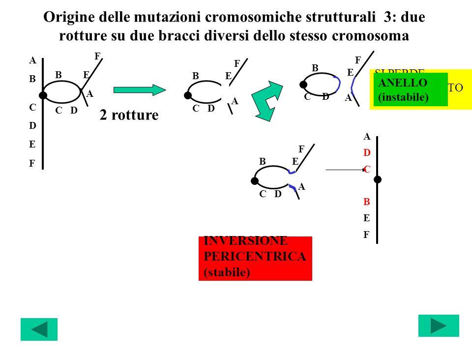 Origine delle mutazioni cromosomiche strutturali 3: due rotture su due bracci diversi dello stesso cromosoma ABCDEFABCDEF F B E A C D F B E A C D SI P