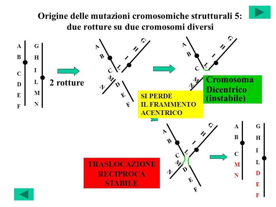 Origine delle mutazioni cromosomiche strutturali 5: due rotture su due cromosomi diversi ABCDEFABCDEF GHILMNGHILMN ABCDEFABCDEF GHILMNGHILMN ABCABC GH