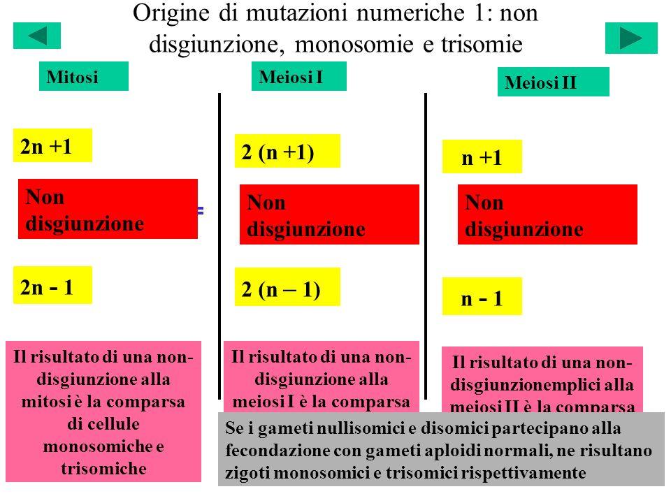 Origine di mutazioni numeriche 1: non disgiunzione, monosomie e trisomie 2n +1 2n - 1 Non disgiunzione Il risultato di una non- disgiunzione alla mito