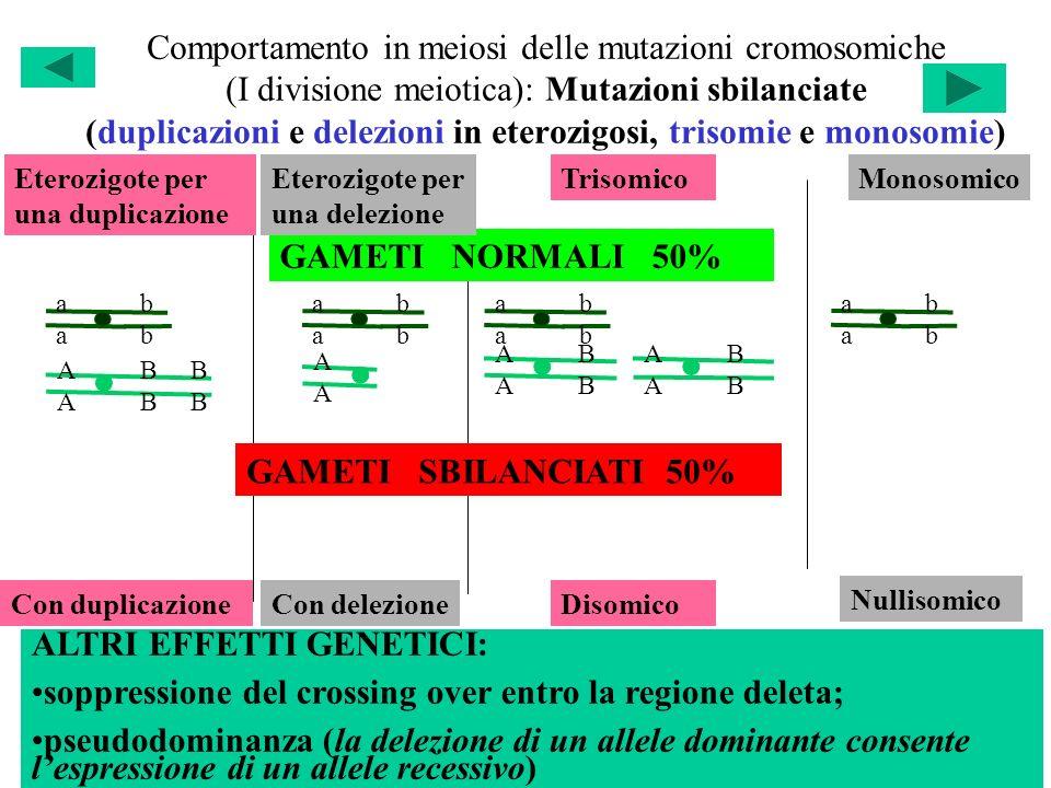 Comportamento in meiosi delle mutazioni cromosomiche (I divisione meiotica): Mutazioni sbilanciate (duplicazioni e delezioni in eterozigosi, trisomie