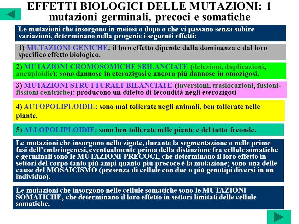 EFFETTI BIOLOGICI DELLE MUTAZIONI: 1 mutazioni germinali, precoci e somatiche Le mutazioni che insorgono in meiosi o dopo o che vi passano senza subir