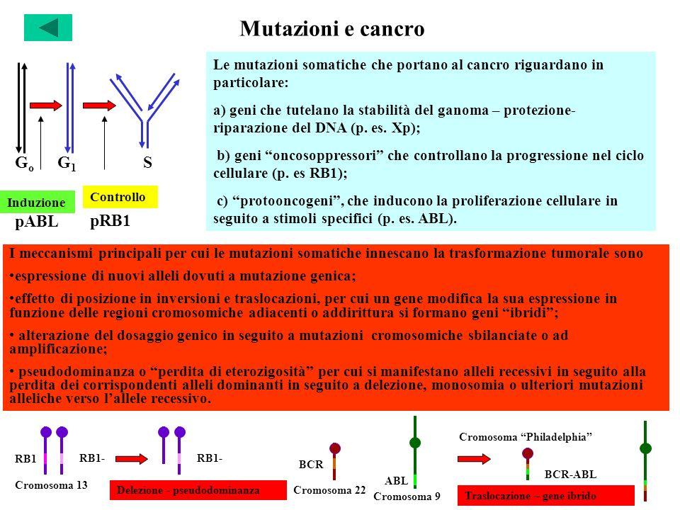 Mutazioni e cancro I meccanismi principali per cui le mutazioni somatiche innescano la trasformazione tumorale sono espressione di nuovi alleli dovuti