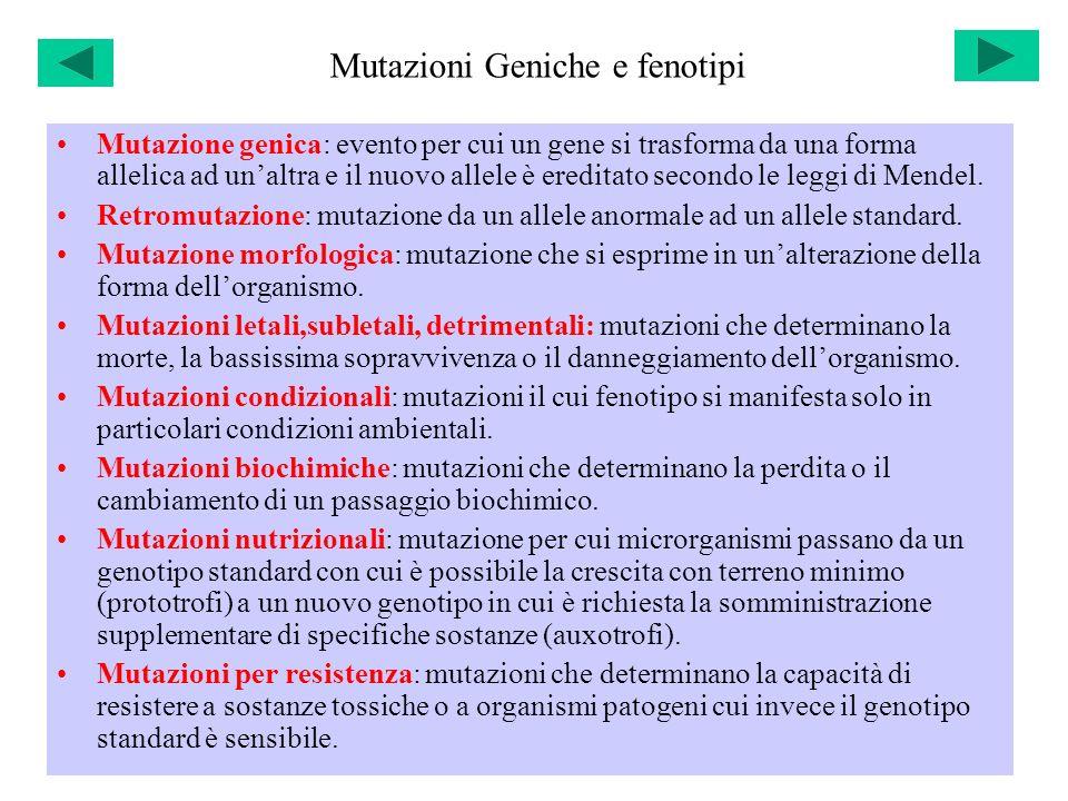 Mutazioni Geniche e fenotipi Mutazione genica: evento per cui un gene si trasforma da una forma allelica ad unaltra e il nuovo allele è ereditato seco