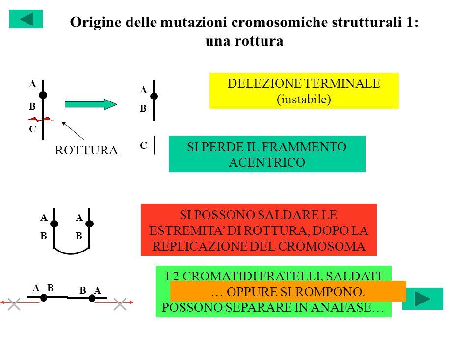 Origine delle mutazioni cromosomiche strutturali 1: una rottura ABCABC ABAB ROTTURA DELEZIONE TERMINALE (instabile) SI PERDE IL FRAMMENTO ACENTRICO C