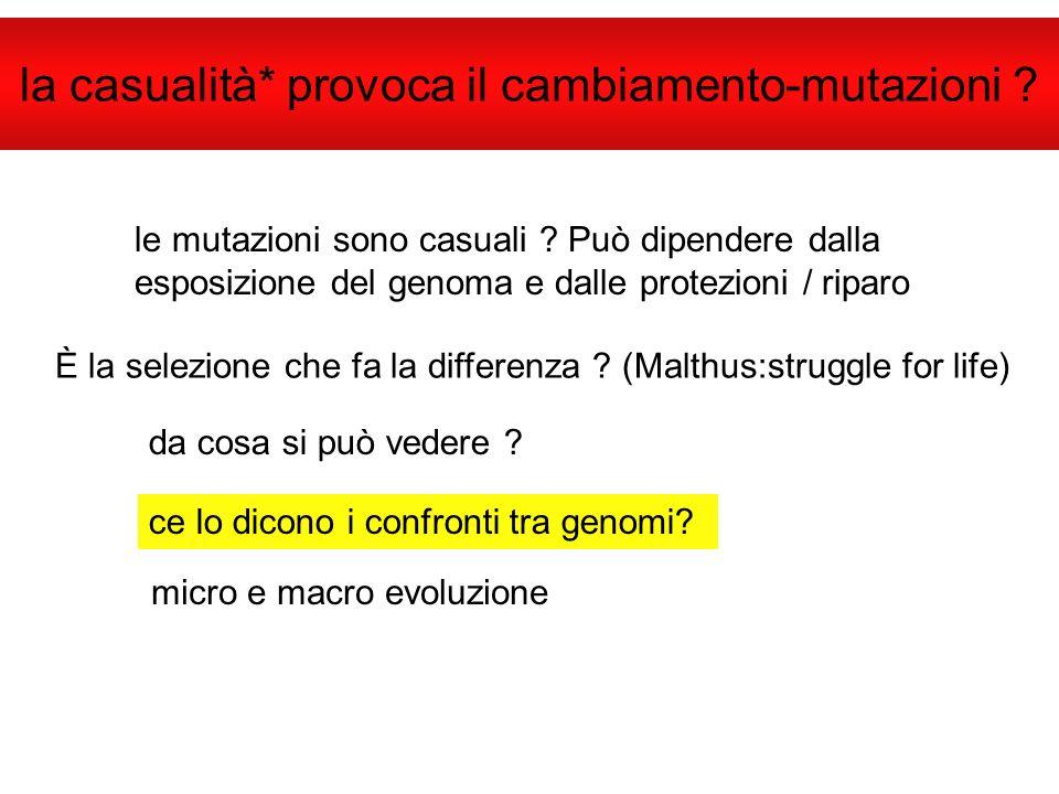 la casualità* provoca il cambiamento-mutazioni ? le mutazioni sono casuali ? Può dipendere dalla esposizione del genoma e dalle protezioni / riparo È