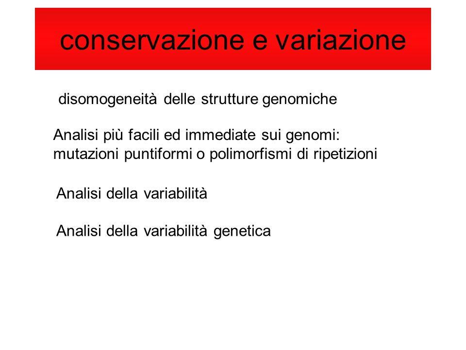 conservazione e variazione disomogeneità delle strutture genomiche Analisi più facili ed immediate sui genomi: mutazioni puntiformi o polimorfismi di