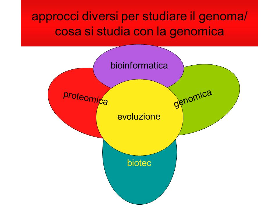 approcci diversi per studiare il genoma/ cosa si studia con la genomica biotec bioinformatica proteomica genomica evoluzione