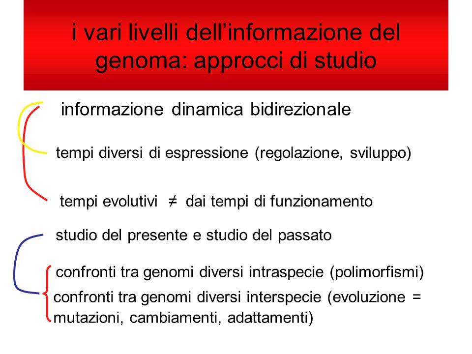 i vari livelli dellinformazione del genoma: approcci di studio informazione dinamica bidirezionale tempi diversi di espressione (regolazione, sviluppo