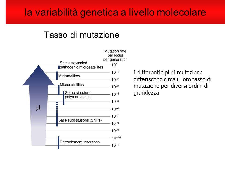 la variabilità genetica a livello molecolare Tasso di mutazione I differenti tipi di mutazione differiscono circa il loro tasso di mutazione per diver