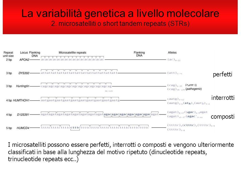 La variabilità genetica a livello molecolare 2. microsatelliti o short tandem repeats (STRs) I microsatelliti possono essere perfetti, interrotti o co