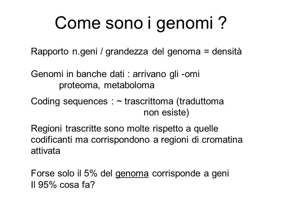 Come sono i genomi ? Rapporto n.geni / grandezza del genoma = densità Genomi in banche dati : arrivano gli -omi proteoma, metaboloma Coding sequences