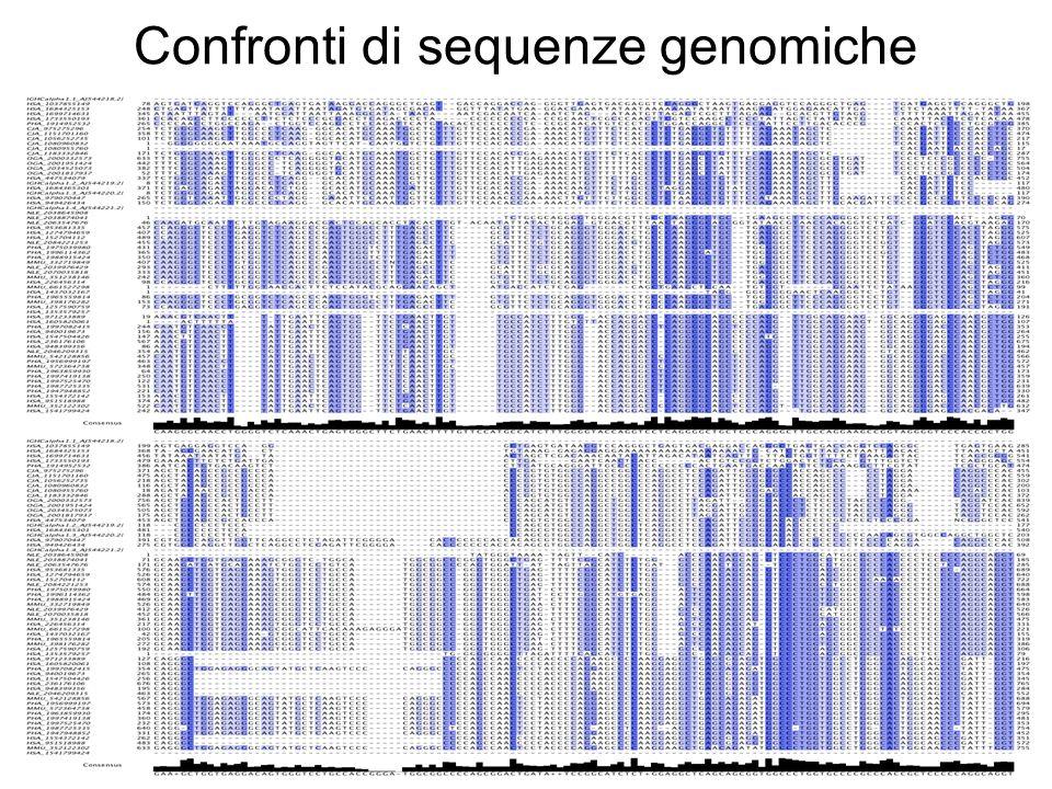 Confronti di sequenze genomiche