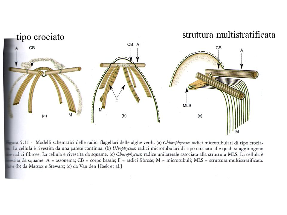 tipo crociato struttura multistratificata