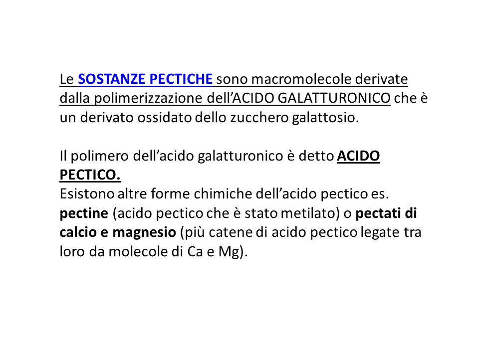Le SOSTANZE PECTICHE sono macromolecole derivate dalla polimerizzazione dellACIDO GALATTURONICO che è un derivato ossidato dello zucchero galattosio.