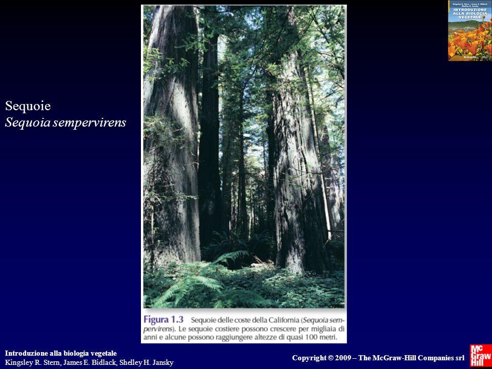 Introduzione alla biologia vegetale Kingsley R. Stern, James E. Bidlack, Shelley H. Jansky Copyright © 2009 – The McGraw-Hill Companies srl Sequoie Se