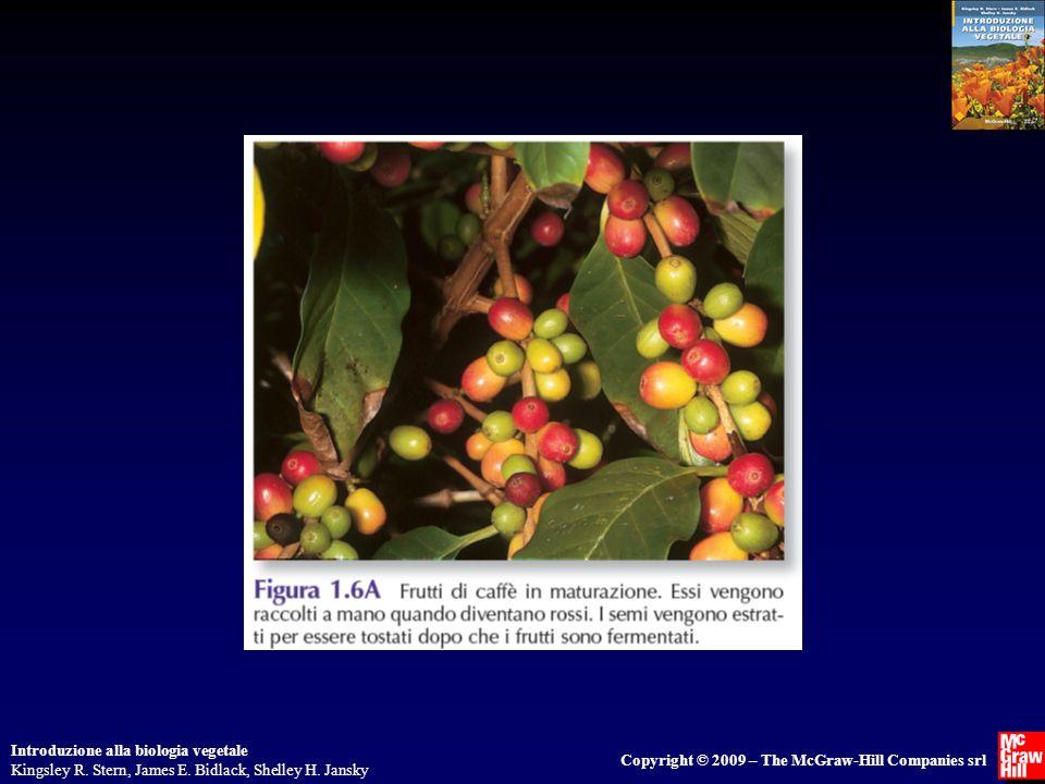 Introduzione alla biologia vegetale Kingsley R. Stern, James E. Bidlack, Shelley H. Jansky Copyright © 2009 – The McGraw-Hill Companies srl