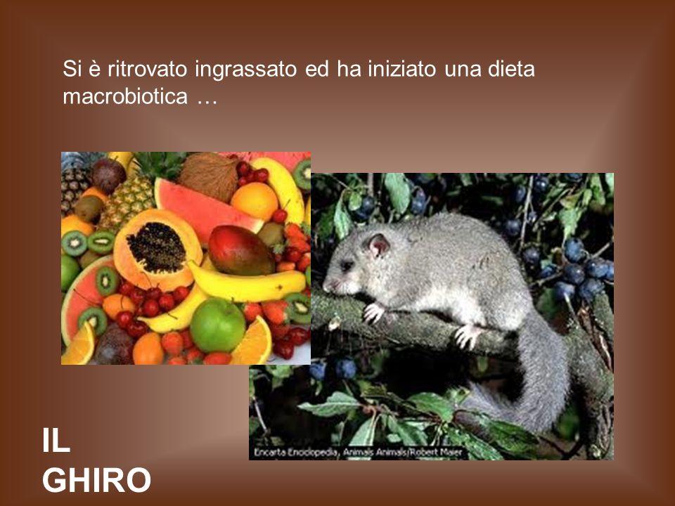 IL GHIRO Si è ritrovato ingrassato ed ha iniziato una dieta macrobiotica …