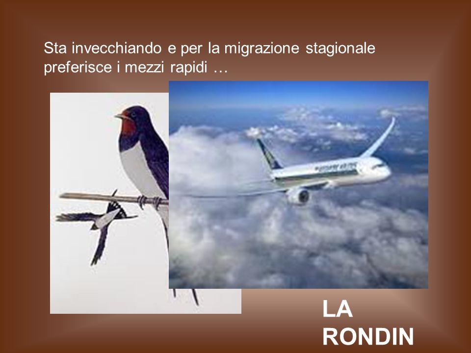 Sta invecchiando e per la migrazione stagionale preferisce i mezzi rapidi … LA RONDIN E