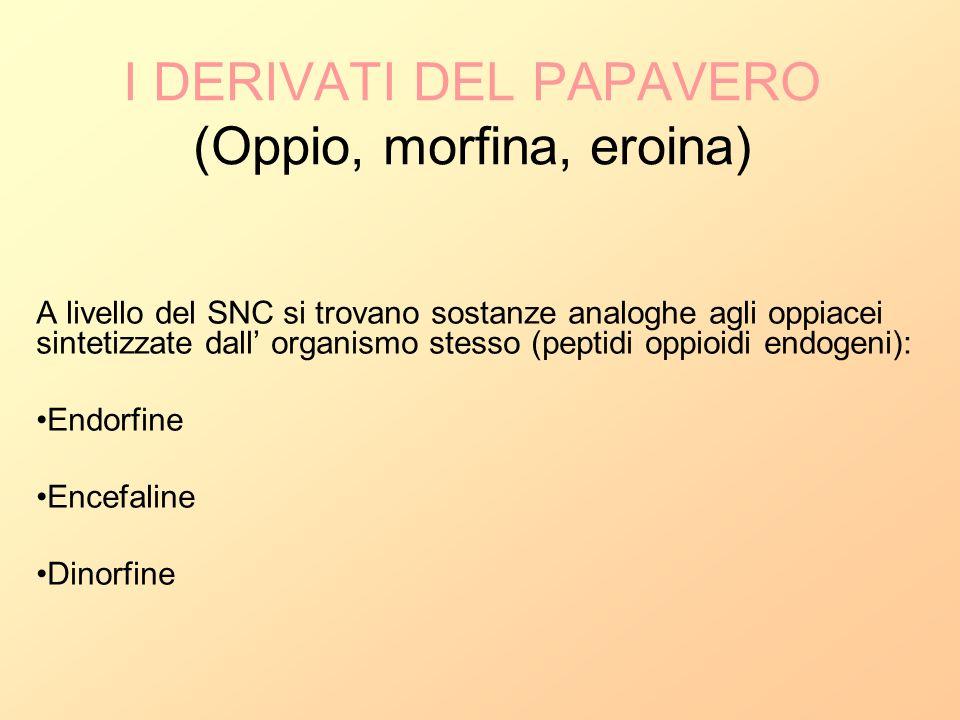 I DERIVATI DEL PAPAVERO (Oppio, morfina, eroina) A livello del SNC si trovano sostanze analoghe agli oppiacei sintetizzate dall organismo stesso (pept