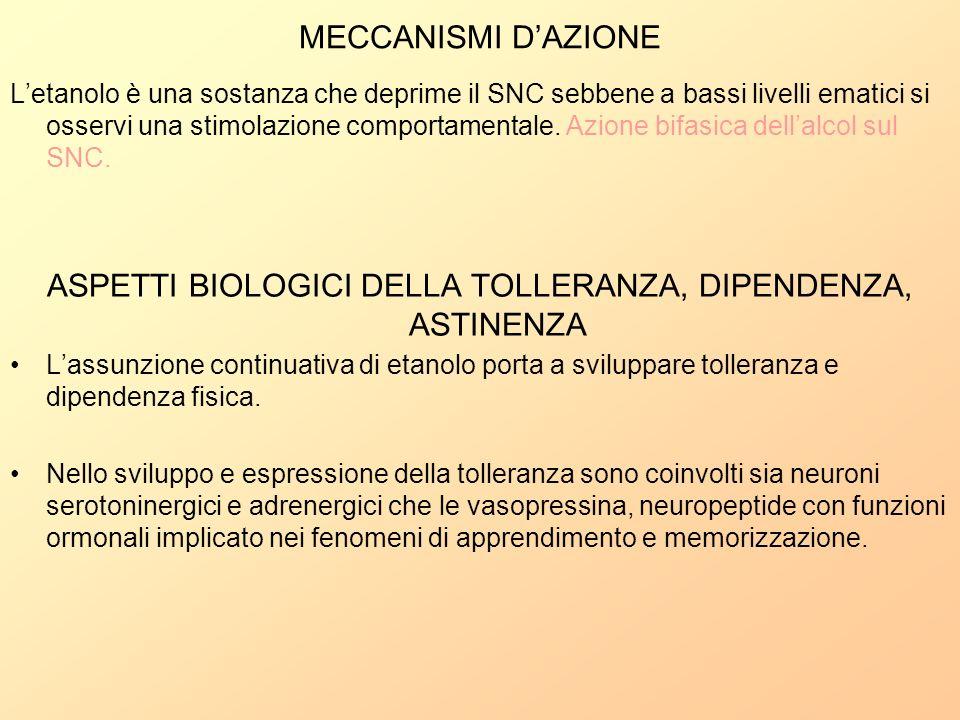 MECCANISMI DAZIONE Letanolo è una sostanza che deprime il SNC sebbene a bassi livelli ematici si osservi una stimolazione comportamentale. Azione bifa