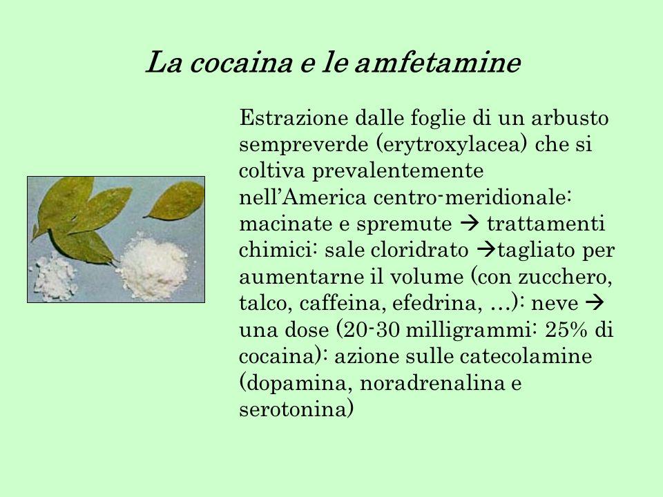 La cocaina e le amfetamine Estrazione dalle foglie di un arbusto sempreverde (erytroxylacea) che si coltiva prevalentemente nellAmerica centro-meridio