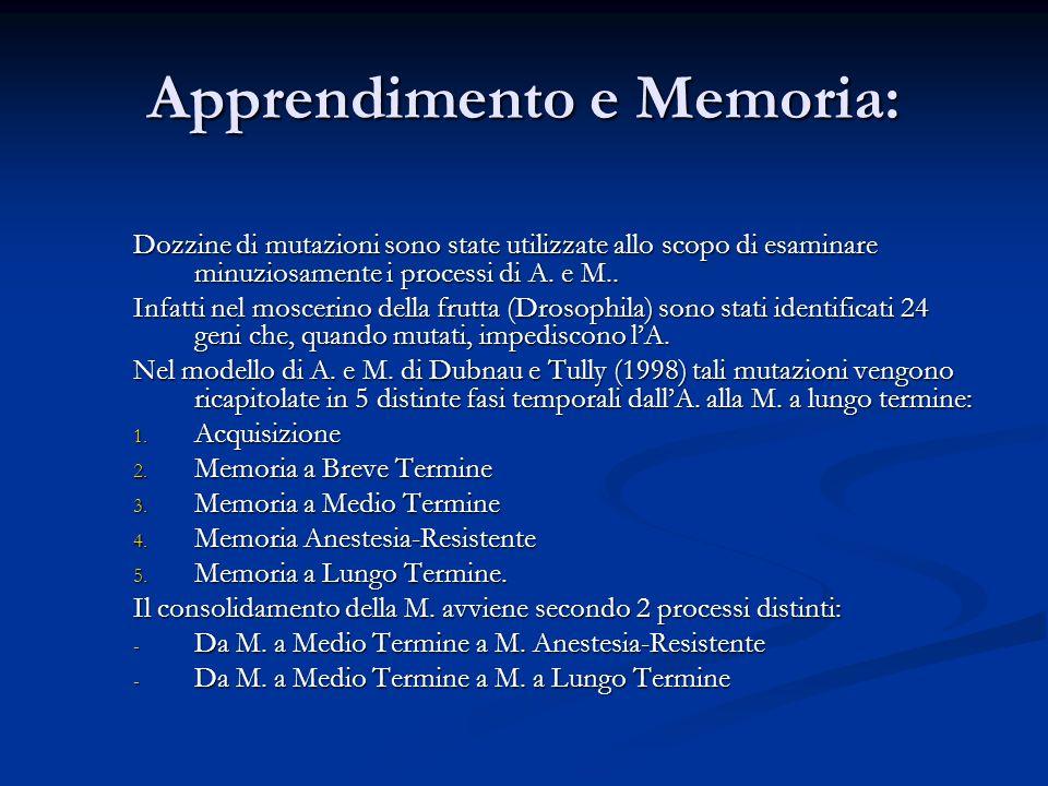 Apprendimento e Memoria: Dozzine di mutazioni sono state utilizzate allo scopo di esaminare minuziosamente i processi di A. e M.. Infatti nel moscerin