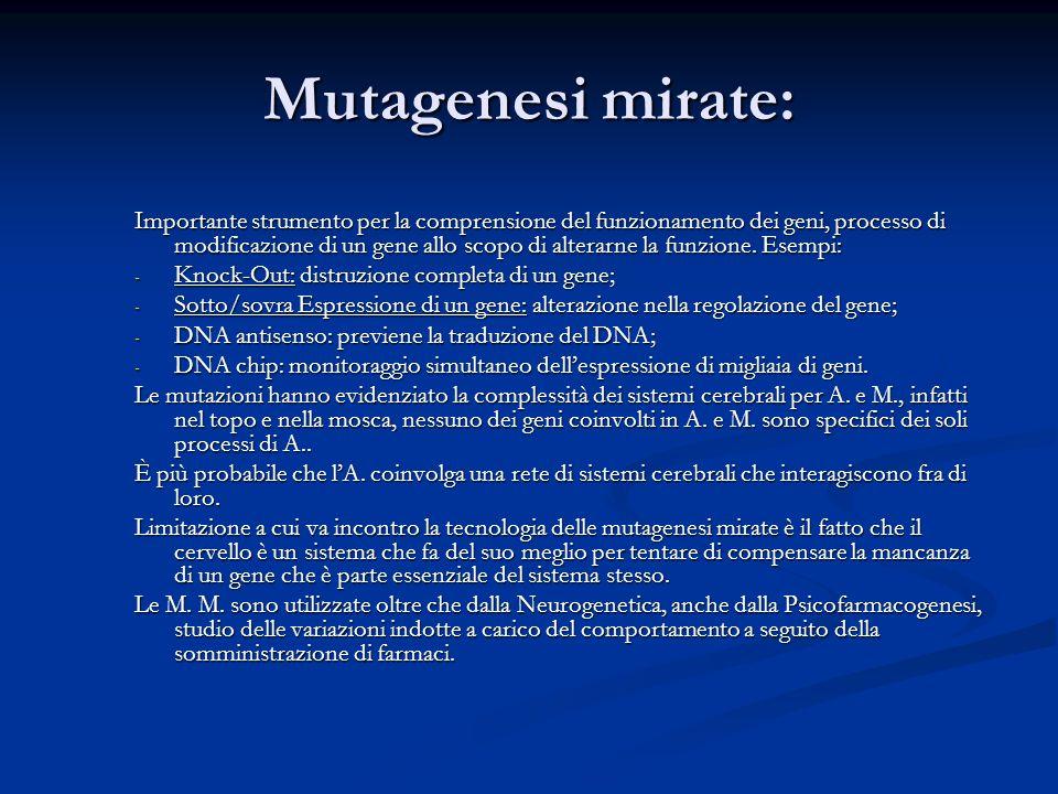 Mutagenesi mirate: Importante strumento per la comprensione del funzionamento dei geni, processo di modificazione di un gene allo scopo di alterarne l