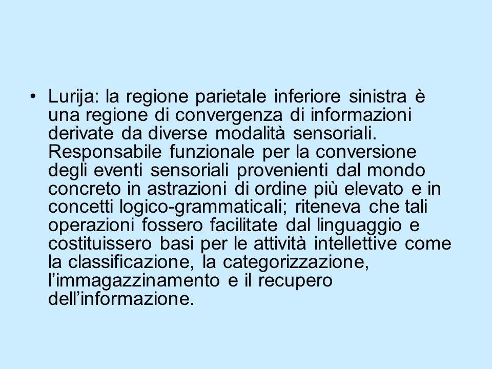 Lurija: la regione parietale inferiore sinistra è una regione di convergenza di informazioni derivate da diverse modalità sensoriali. Responsabile fun