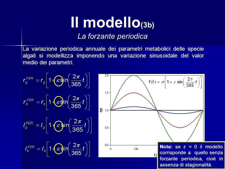 Il modello (3b) La forzante periodica La variazione periodica annuale dei parametri metabolici delle specie algali si modellizza imponendo una variazione sinusoidale del valor medio dei parametri.