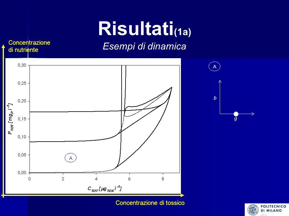 Risultati (7a) Lintroduzione della dinamica della concentrazione del tossico nelle biomasse algali comporta la nascita di comportamenti dinamici (coesistenza stazionaria e ciclica) non ammessi in un modello che prevede concentrazione di tossico costante.